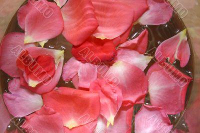 Red rose`s petals
