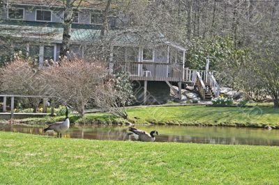 Landscaped Yard With Pond
