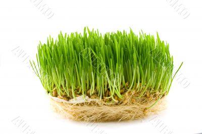 green juicy grass