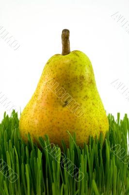 pear on grass