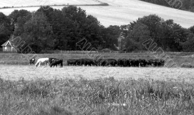 Nostalgic British rural view
