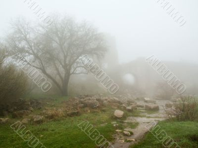 stronghold ancient mist morning age-old wall tree