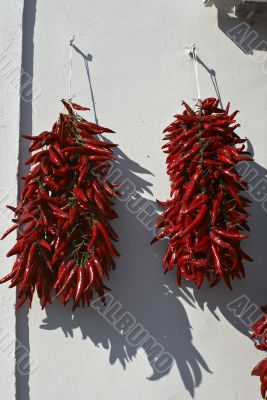 Red Hungarian peppers, symbol of Hungary