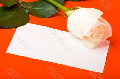 macro white rose on red with blank card