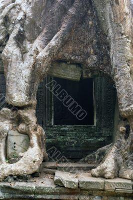 Door and root