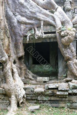 Big root and door