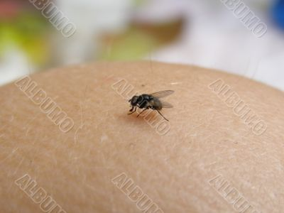 Fly on the skin