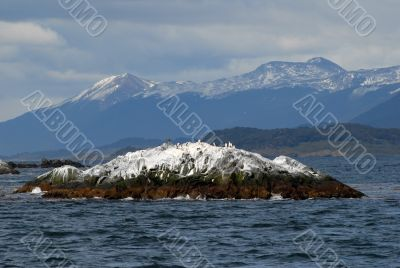 Island with birds on the Beagle Channel, Ushuaia.
