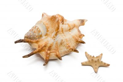 mussel and Starfish