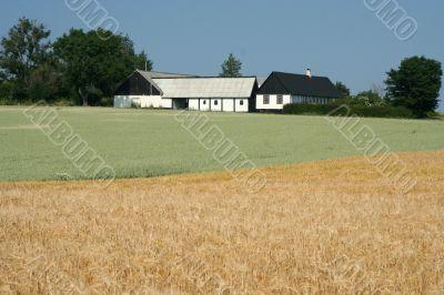 Wheats fields in the farm