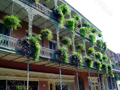 Wrought Iron Balconies with Ferns