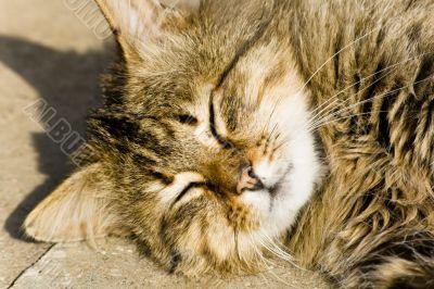 Cheerful cat enjoying summer sun