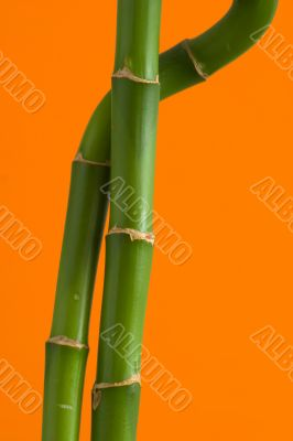 Two bamboo branches