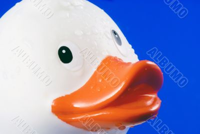 Rubber duck.