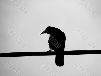 A Ravens Silhouette