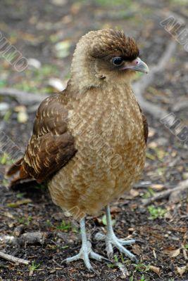 Suprised bird