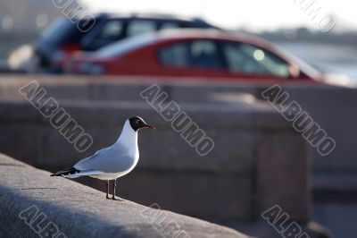 seagull seating on the granite embankment