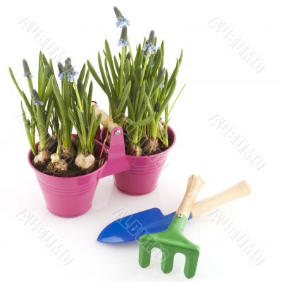 gardening with bulbs