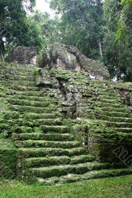 Tropical maya stairs