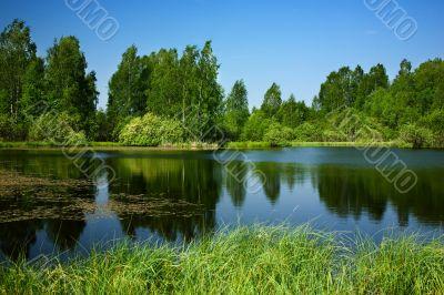 Pond,birches
