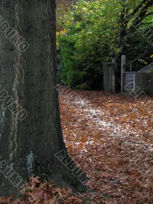 fall leaves covering the ground