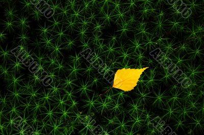 Autumn leaf on green stars