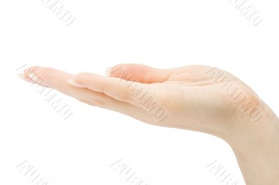 Woman hand holding anything isolated with clipping path