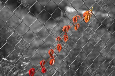 Leaves of grapes on wire mesh