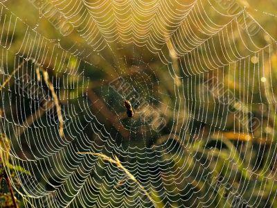 spider and midge