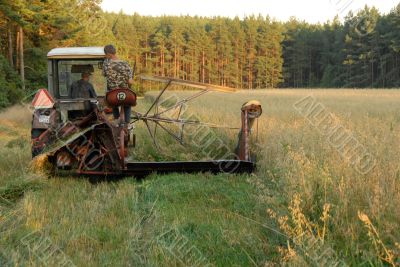 cutting up hay in a field