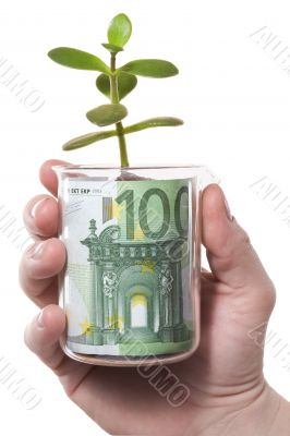 Hand,glass,euro,sprout