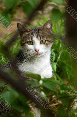 stray cat hiding in the bush