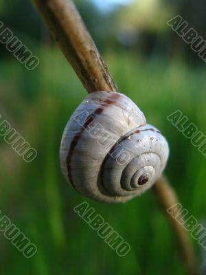 Little snail on brown branch