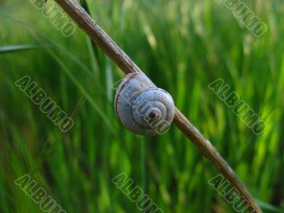 Little snail on brown branch
