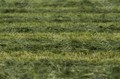 Preparation of a football field. Organic texture.