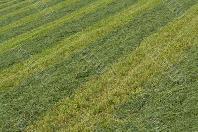Organic texture. Striped lawn