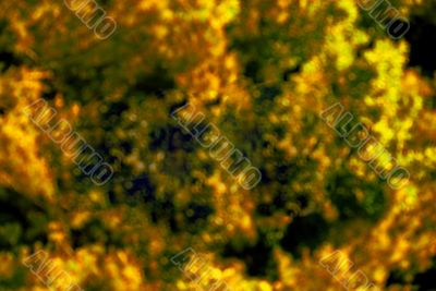 Fall Foliage back ground