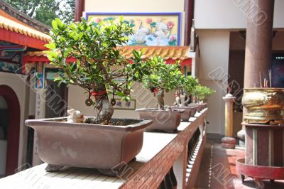 Plants in chinese temple