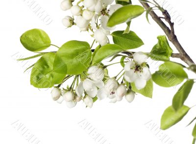 Flower on white.