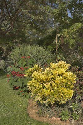 A blossoming botanical garden