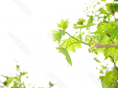 Green leaves. Add text.