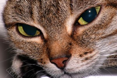 Cat`s sight