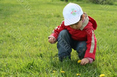 little girl in red coat tear flower dandelion