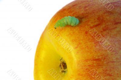 green caterpillar eat an apple
