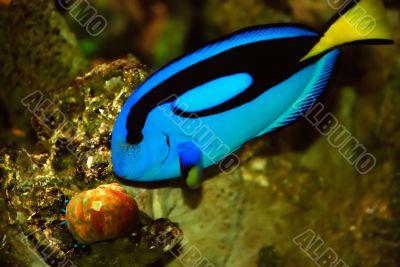 blue fish and seashell
