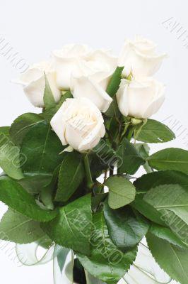 Bouquet of cream roses i