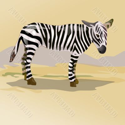zebra in savanna