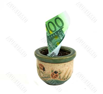 Banknote 100 euros which grows in pot