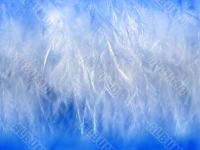 White feathers close-up