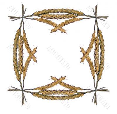 Framework from ears of wheat 1